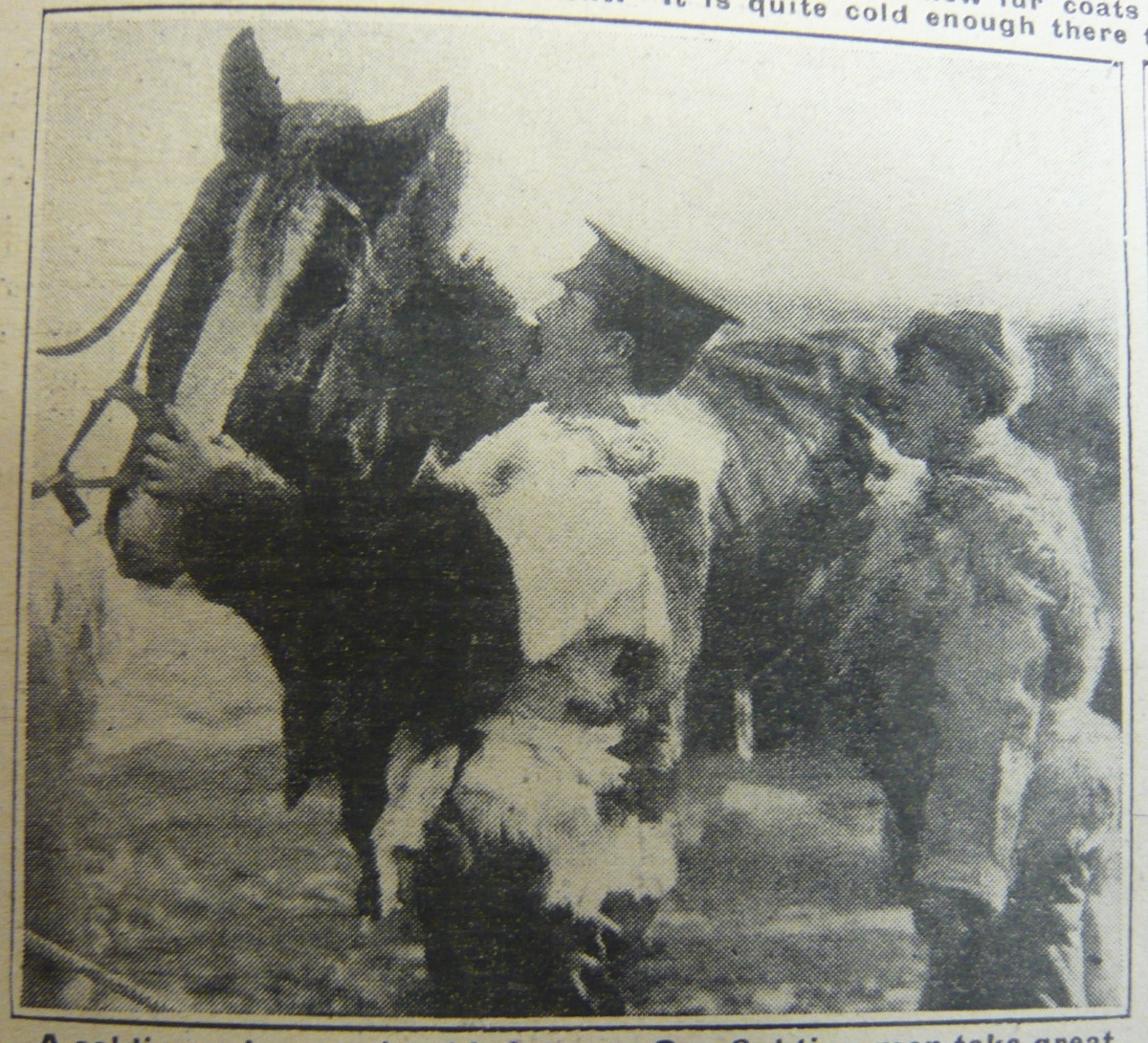 Sense & Sentimentality: The Soldier-Horse Relationship in The Great War.